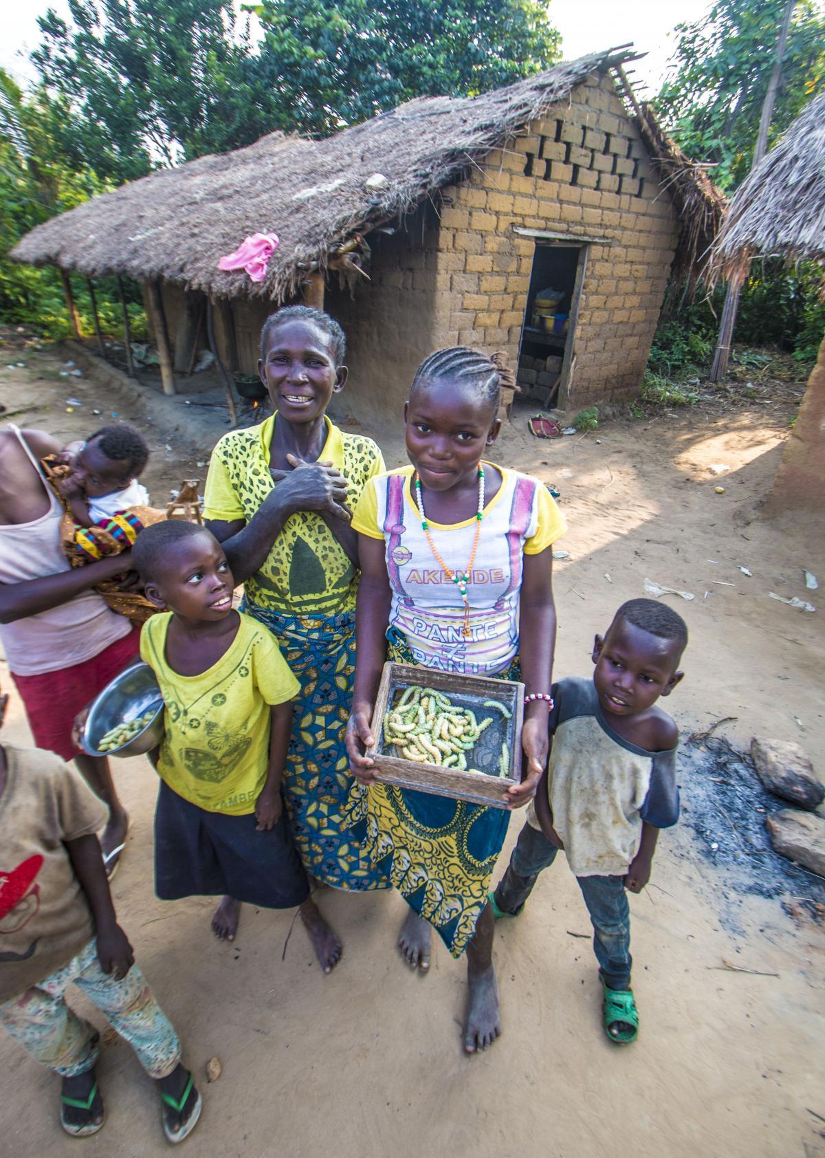 La chenille Nsani gata (Samia ricini) est originaire d'Inde, mais a été immédiatement adoptée par la population du Kongo central.